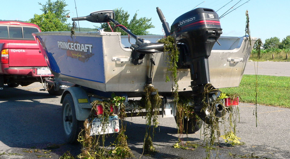 Boat with invasive species contamination